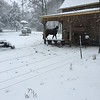 A black horse shows up really well in the snow