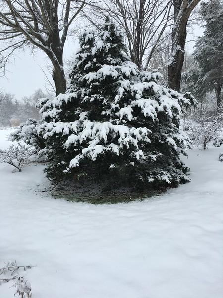 Beautiful mystery evergreen...