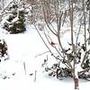 An amazine snow at Gum Tree Farm