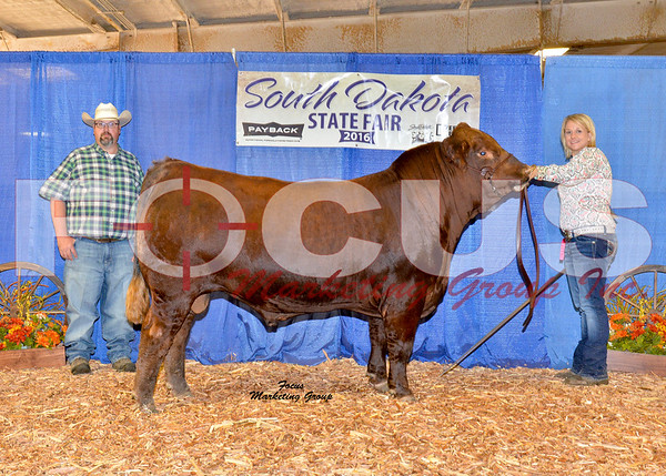 Limousin Shows