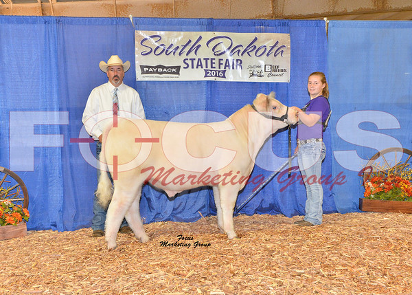 Shorthorn Shows