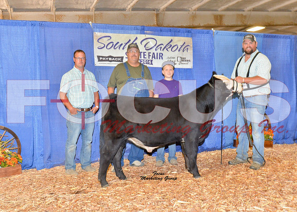 Simmental Shows