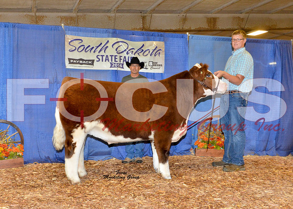 World Steer Show