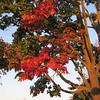 10-09-16 Dayton 08 sunrise, leaves