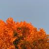 11-10-16 Dayton 161 leaves