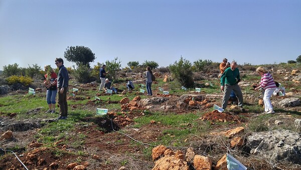 6-planting-trees
