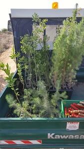 1-planting-trees