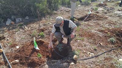 5-planting-trees