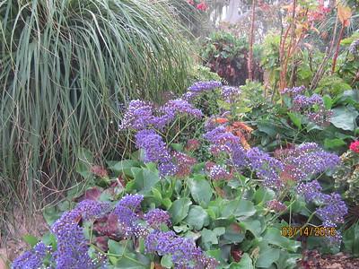 ein gedi gardens2