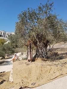 20-nazareth-village