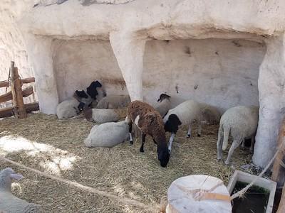 21-nazareth-village