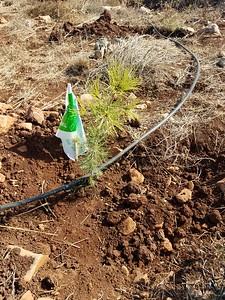 14-tree-planting