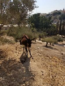 25-nazareth-village
