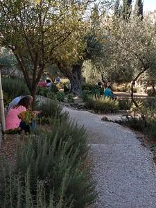 17-garden-of-gethsemane
