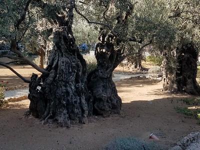 15-garden-of-gethsemane