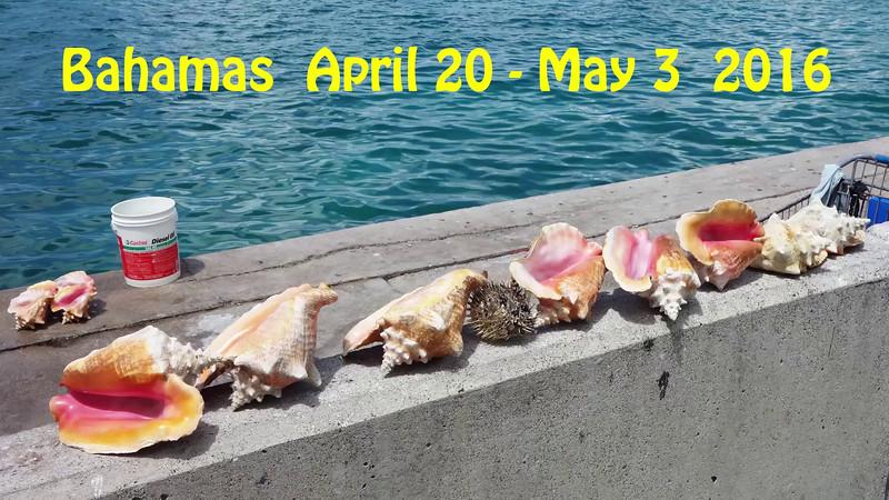 AquaCat_Bahamas_2016_smugmug