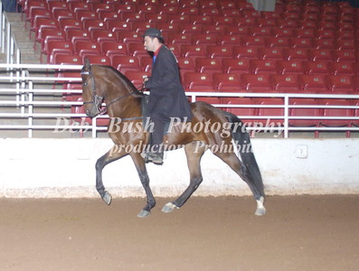 CLASS 33  OPEN COUNTRY SADDLE
