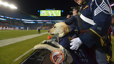 Corps of Cadets dog, Growley II, watches the game from the sidelines during the fourth quarter. (Michael Shroyer/ TheKeyPlay.com)