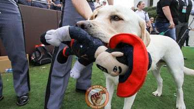 Tank, the Corps of Cadets dog, holds his Cav Man chew toy on the sidelines near the Corps section. (Mark Umansky/TheKeyPlay.com)