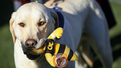 Growley II holds onto a toy version of Georgia Tech's mascot, Buzz, before kickoff. (Mark Umansky/TheKeyPlay.com)