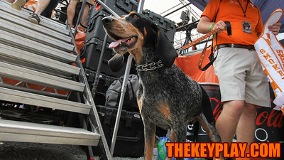 Tennessee's live mascot, Smokey, waits behind the ESPN College Gameday set. (Mark Umansky/TheKeyPlay.com)