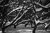 Meadowlark-5594-Edit-Edit