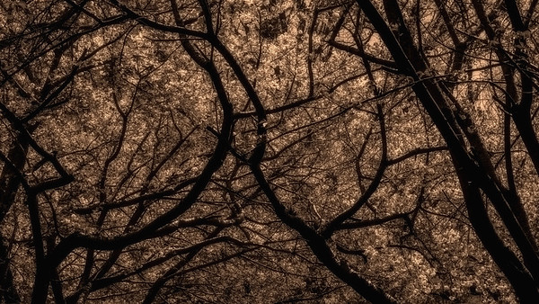 Meadowlark-0356-Edit-Edit