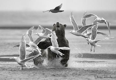 Pesky Gulls
