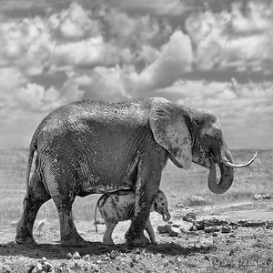Africa-Kenya--001