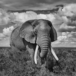 Africa-Kenya--012