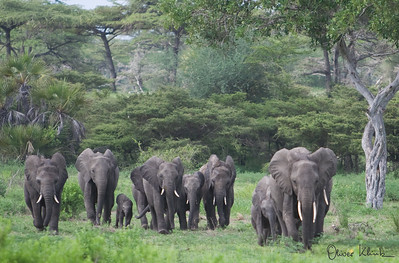 Africa-Kenya--006