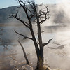 Tree Remnant, Mammoth Hot Springs