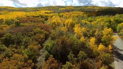 1-Manti LaSal mountain Fall foliage