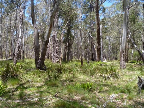Lush grassy understory