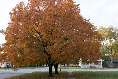 10-19-2016 fall trees MCCD pics