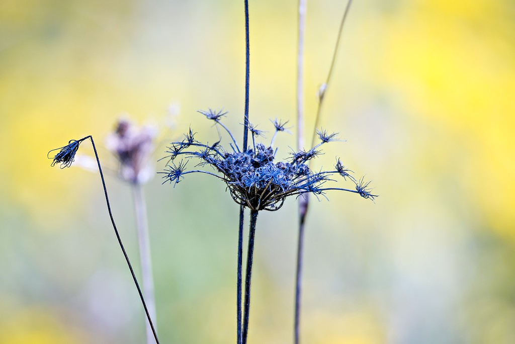 Abstract closeup photo of dry flower with interesting texture and nice bokeh