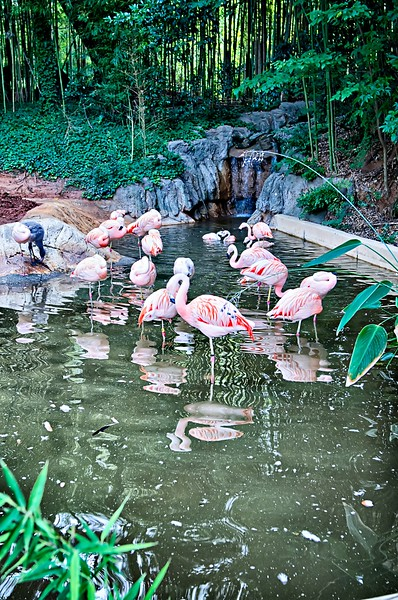 pink flamingo bird bathing in the sun