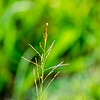 Green wild grass on a forest meadow Macro image with shallow depth of field