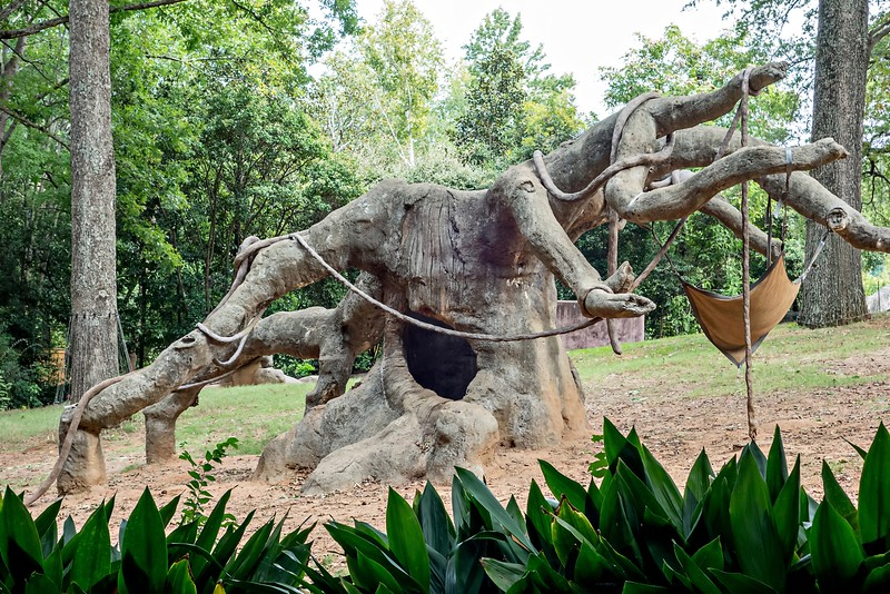 giant tree at zoo for gorillas