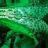 alligator closeup at the zoo aquarium