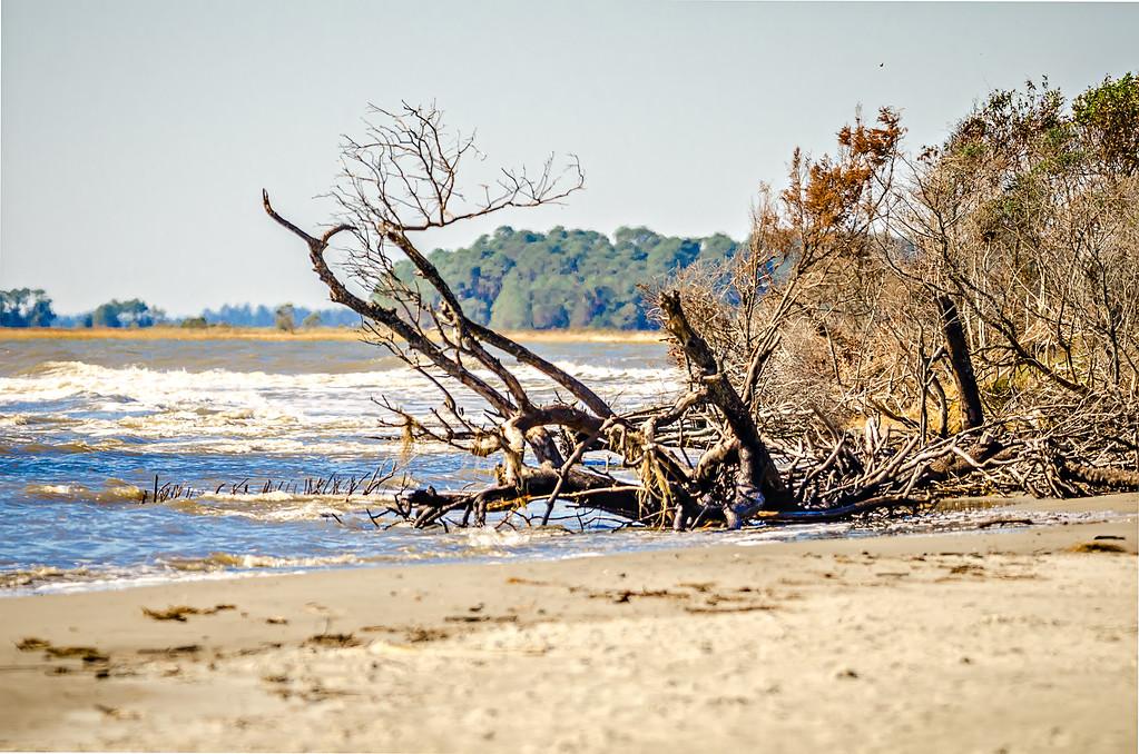 beach scenes around folly beach south carolina