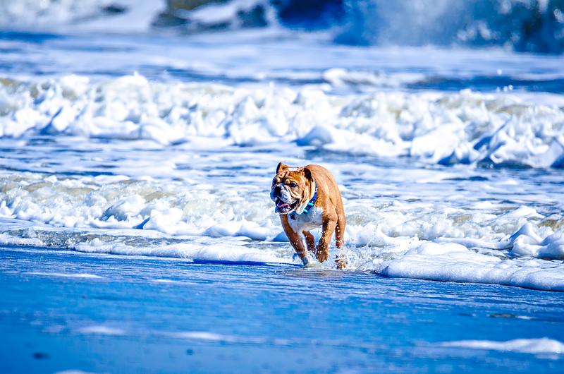 doggy playing on the coast of south carolina