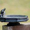 Closeup of a public drinking water tap in a park