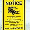 alligator warning sign notice near water
