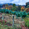 autumn colors in the blue ridge mountains