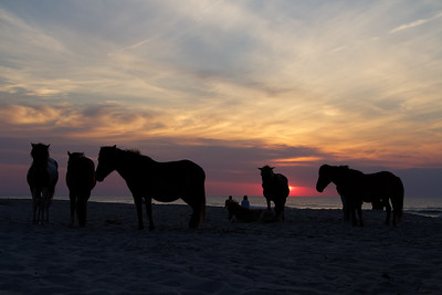 Good Morning; Assateague 2016