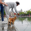 Nederlands, Amsterdam. hondje met watervrees krijgt hulp. dog with hydrophobia gets help.2 augustus 2016, foto: Katrien Mulder