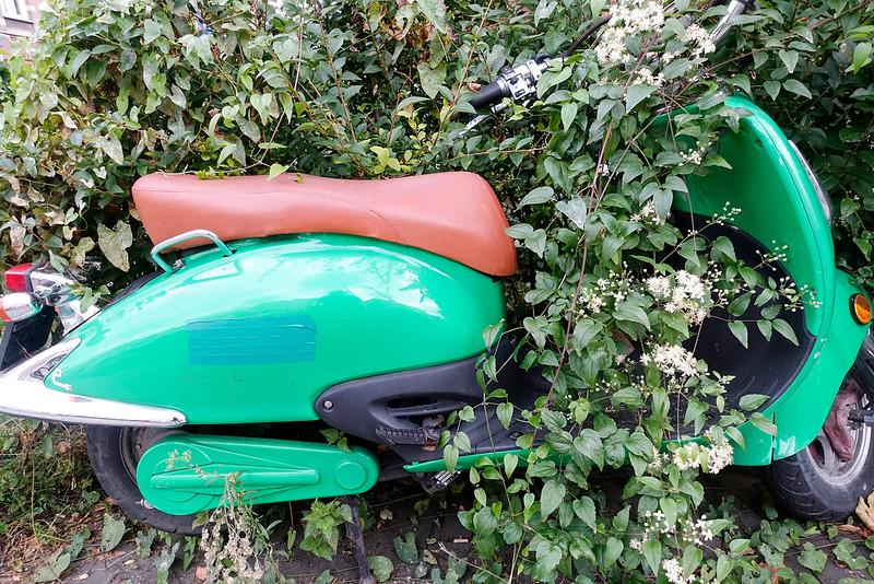 Nederland, Amsterdam, Amsterdam Oost, 9 oktober 2016, scooter overwoekerd door bruidssluier, foto: Katrien Mulder