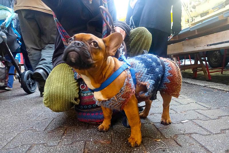 Duitsland, Berlijn, Phillippijnse Gospel met hond Cashew, Cashew draagt een trui die Gospel  voor hem heeft gebreid. Maar nu is die aan vervanging toe, hij hangt aan flarden. Daarom zijn hij en zijn Belgische vriendin Gertie op de Turkse markt, op zoek naar goede wol zodat Gospel een nieuwe trui voor Cashew kan breien.<br />  6 december 2016, foto: Katrien Mulder