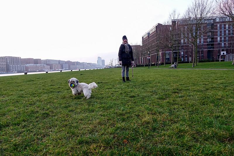 Nederland, Amsterdam, Java Eiland, apporterend hondje, 22 december 2016, foto: Katrien Mulder